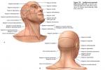 Linea cervicocefalica